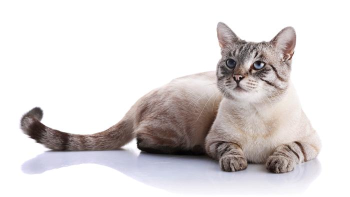 répulsifs chats naturels